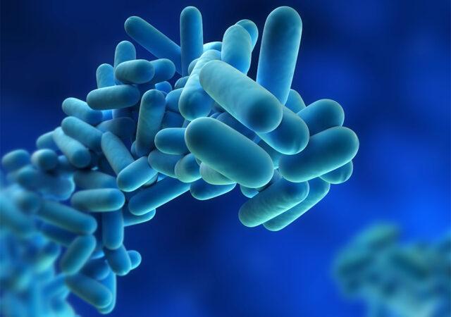 Legionella,Pneumophila